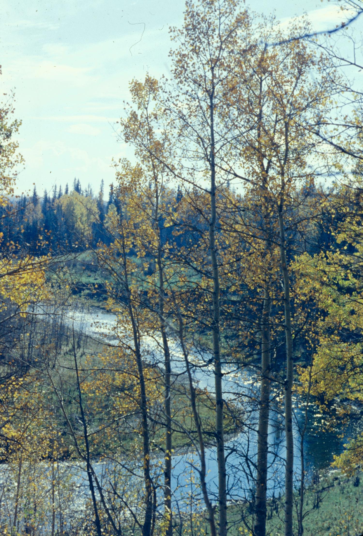 Fallen Timber,Fall